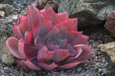 Succulents add instant color and texture to the garden. (Photo: Dorothy Weaver)