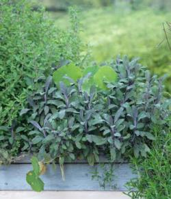 Herbs are among the easiest plants to grow