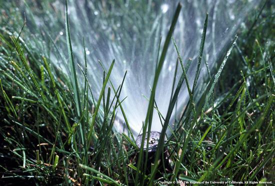 Lawn w sprinkler