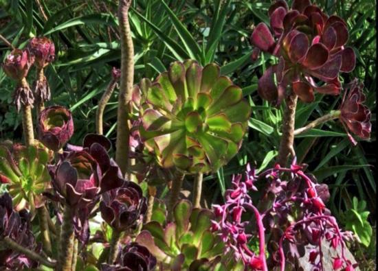 Succulent 2 ed