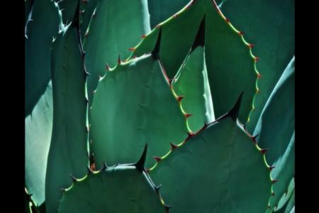 Succulent 1