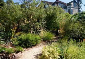 Meditteranean Plant Garden