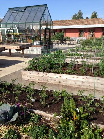 how to start a community garden greenhouse and planted beds_vertical - How To Start A Community Garden