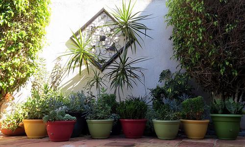 Fine tune your garden