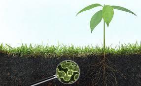 L soil