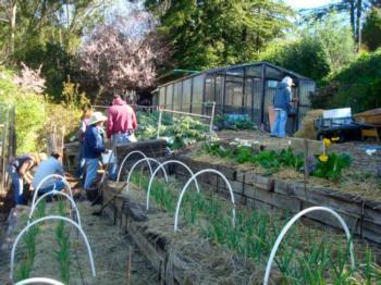 Cedars TAC Garden - Photo by Carol Schwartz