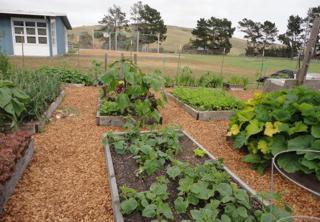 West Marin Elementary School Garden