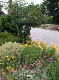 Fruit trees and many colorful perennials appreciate hot summers and cold winters