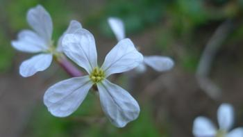 Gardening Tips - Wildflowers