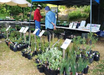 MG plant sale