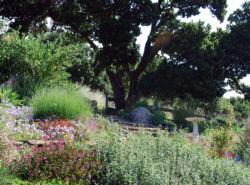 MG plant landscape