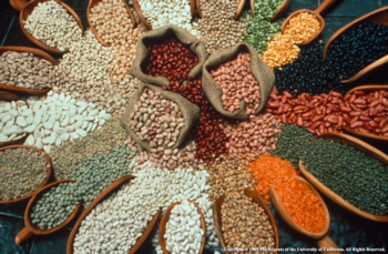 Commercialization has significantly reduced seed choices: only 6% of the seeds available in 1903 are available today. Photo: UC Regents