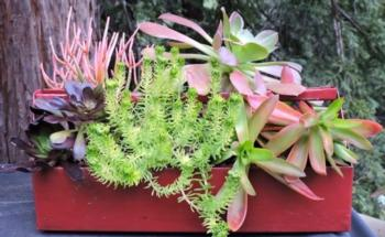 Succulents are an excellent choice in containers. Photo: Gail Mason