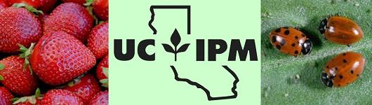IPM Header