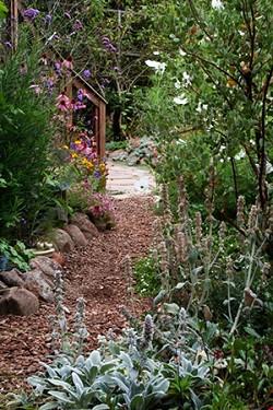 Cindy's Habitat Garden Picture 2