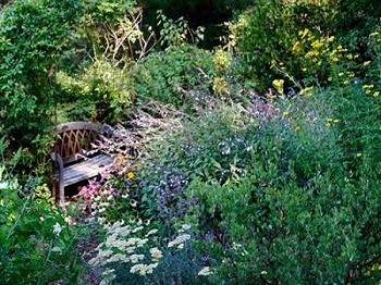 Cindy's Habitat Garden Picture 3